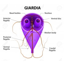 Giardióza- laboratórne vyšetrenie