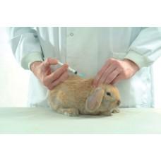 Očkovanie-  králik